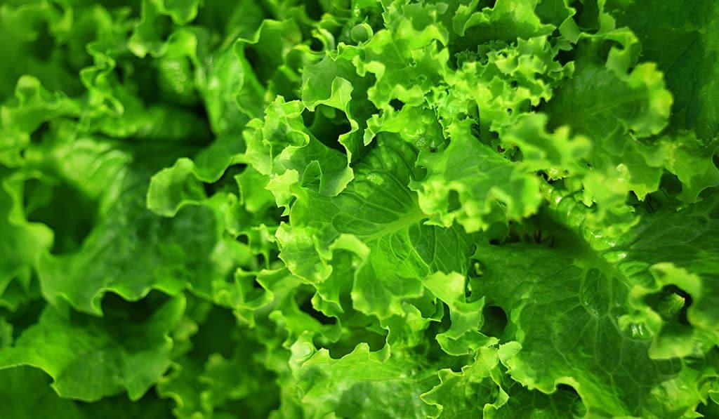 Листовая зелень