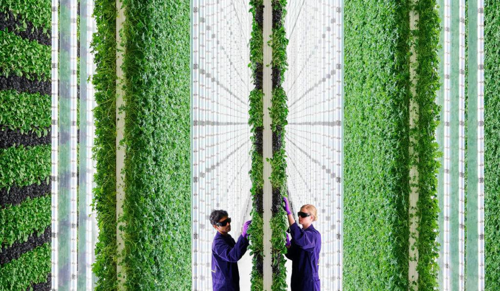 Бюджет вертикальной фермы в Дубае