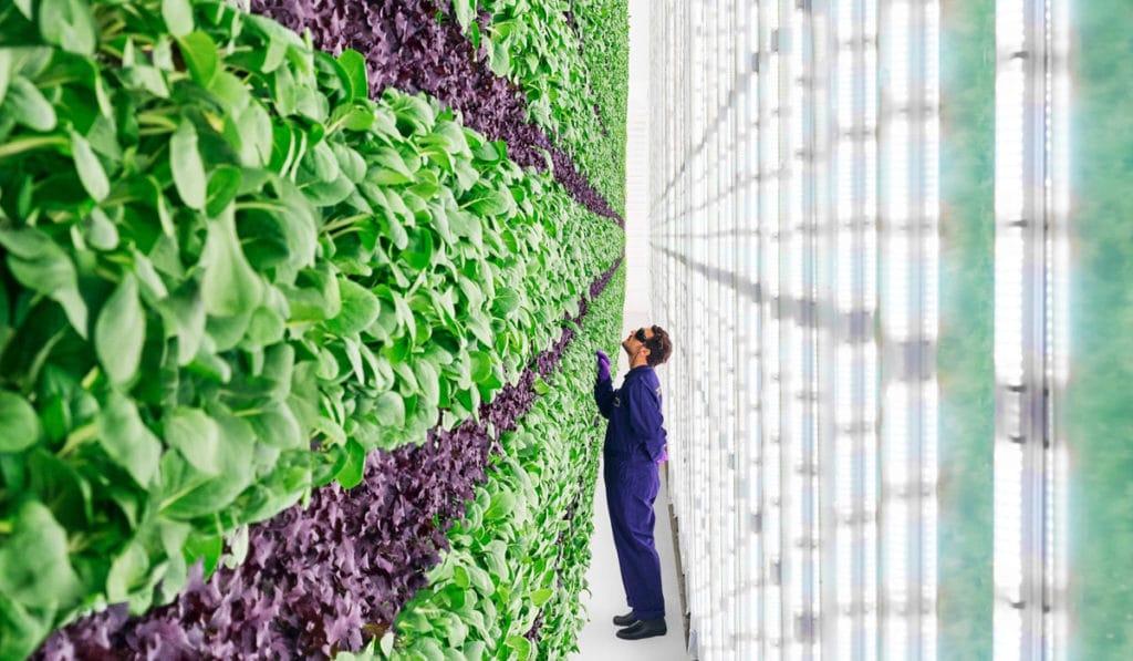 Новые технологии выращивания на вертикальной ферме в Дубае