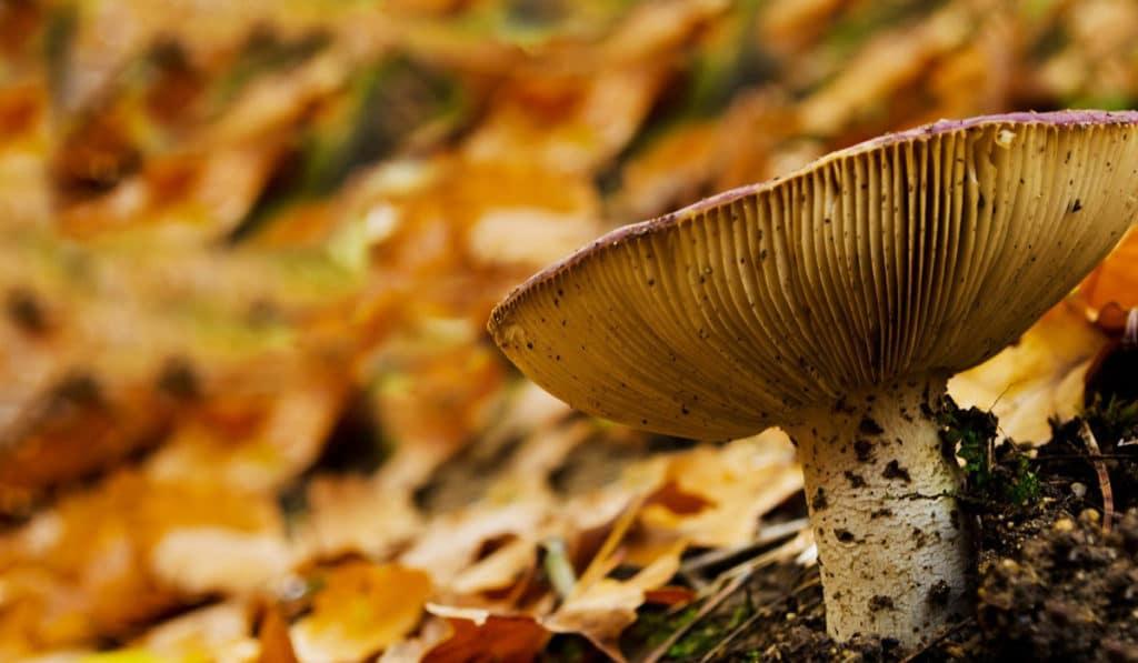 Польза грибов для здоровья