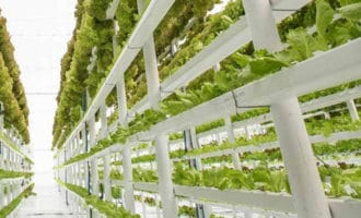 Самая большая вертикальная ферма в Дубае