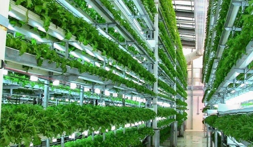 Вертикальная ферма для зелени и овощей в Дубае