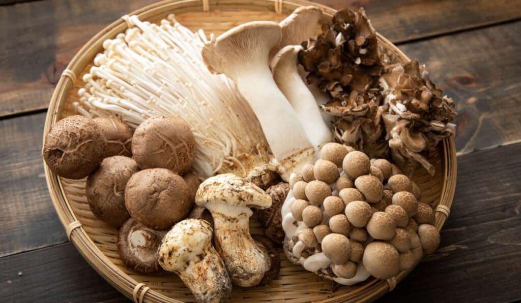 Разные виды грибов в кулинарии