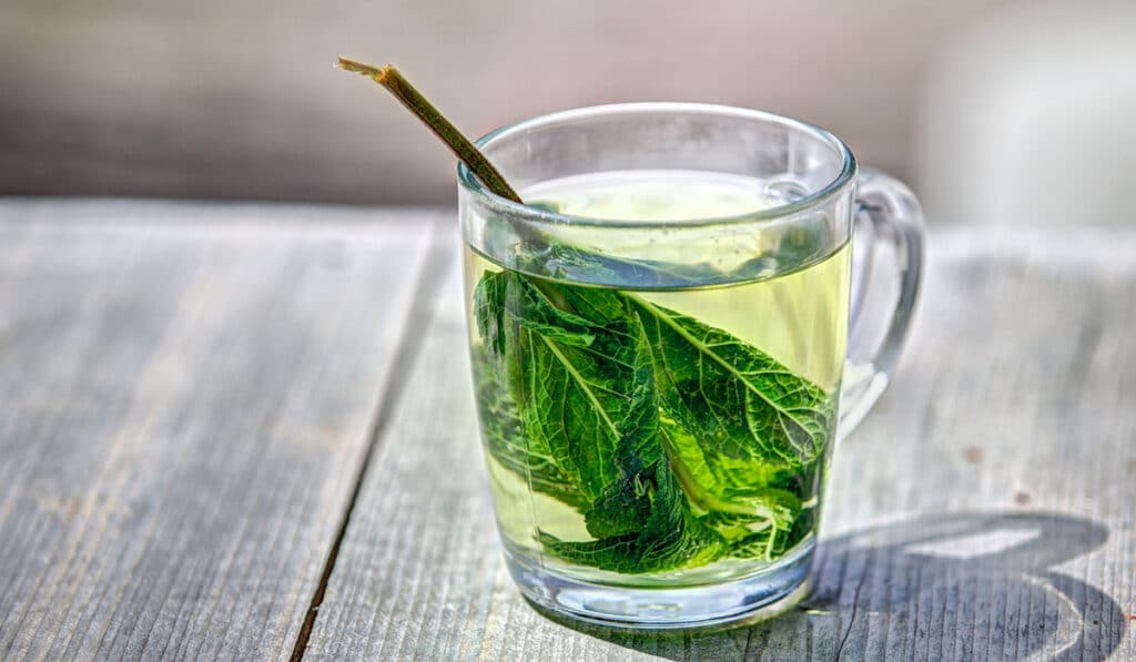 Зеленый чай для предотвращения рака